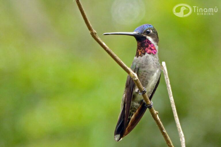 Cortesía Tinamú Birding (2)